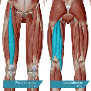 músculos que interfieren en la fase del swing